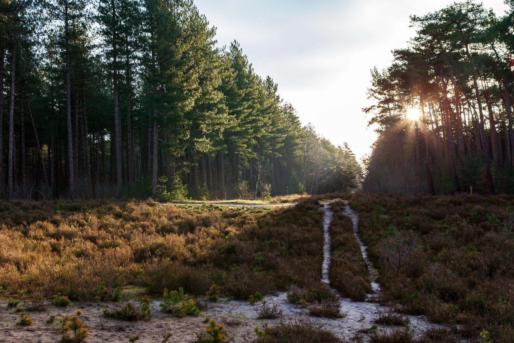Ochtendgloren in het bos